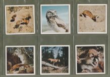 TRADE  cards set Disneyland true life Animal, Owls, Elephet ,Egale ,